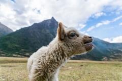 Website-Peru-05