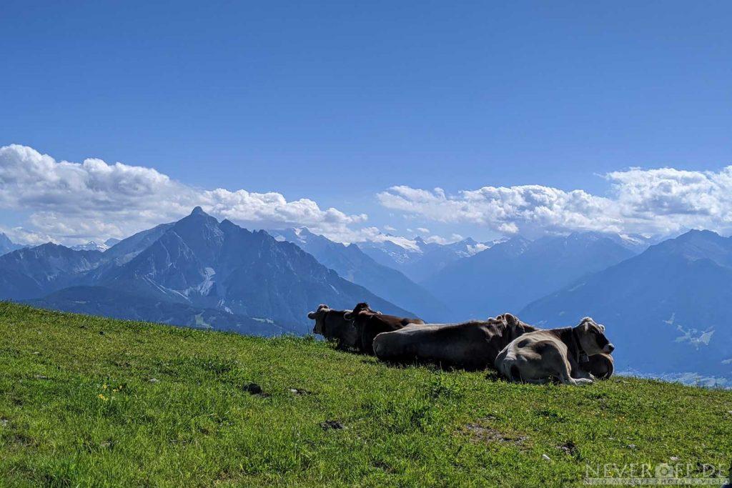 Kühe nahe der Bergstation