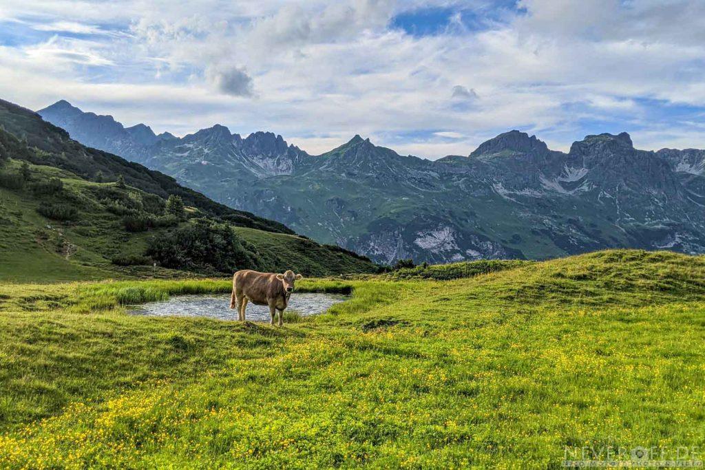 Kuh vor Bergen